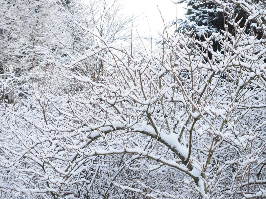 Kostenlose Bild: Schnee, Baum, Wetter, Winter, Holz, Zweige ...