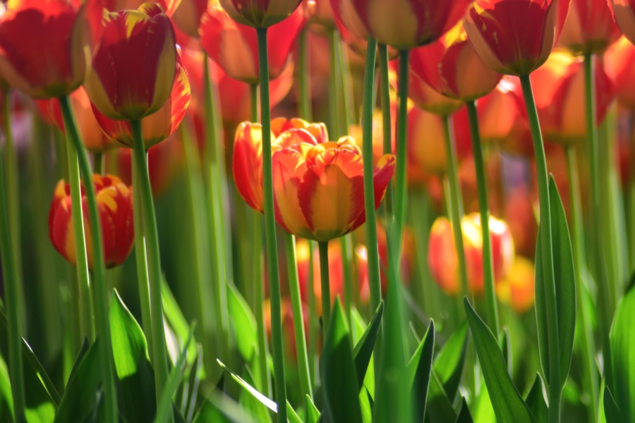 seizoen zomer, mooi, bloei, bloesem, veld, bloemen