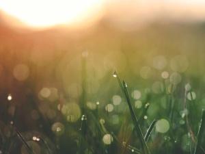 moisture, nature, wet, dew, grass