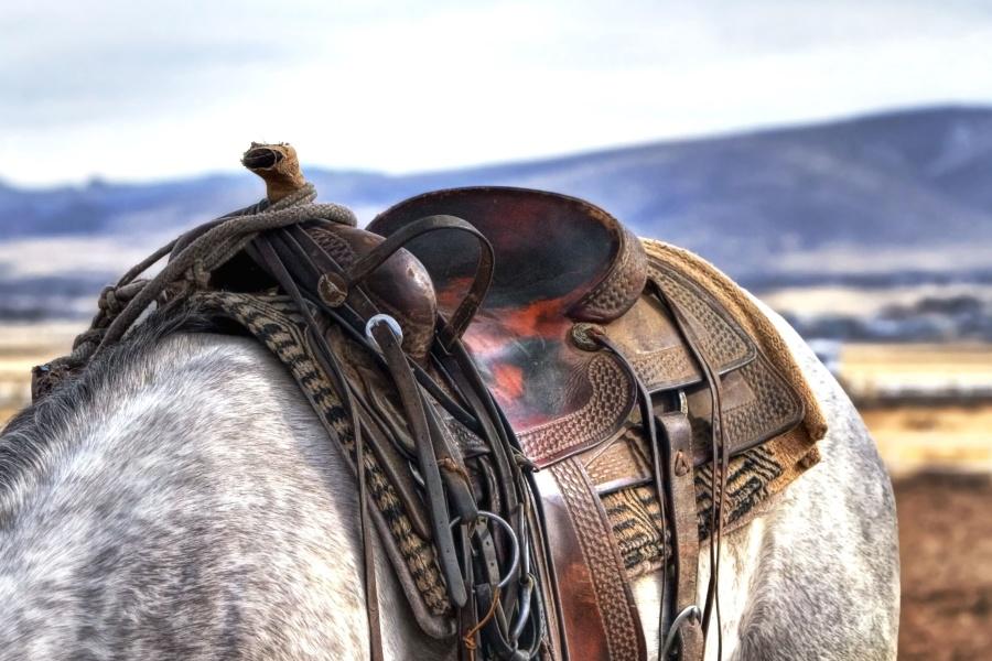field, horse, macro, saddle, animal