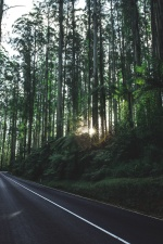 road, travel, trees, forest, nature, roadway