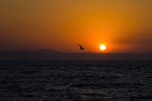 φύση, νερό, θάλασσα, ζώο, πτηνών, παραλία, πουλί