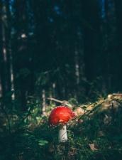 grass, mushroom, tree, forest, fungus