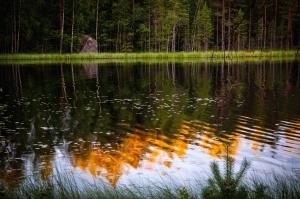 planta, reflexión, río, roca, árbol, agua, madera