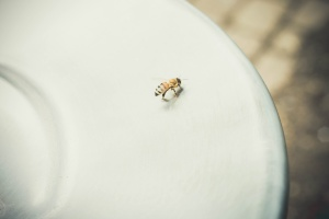 insect, plate, animal, bee