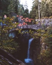 tree, waterfall, wood, bridge, leaf, moss, nature