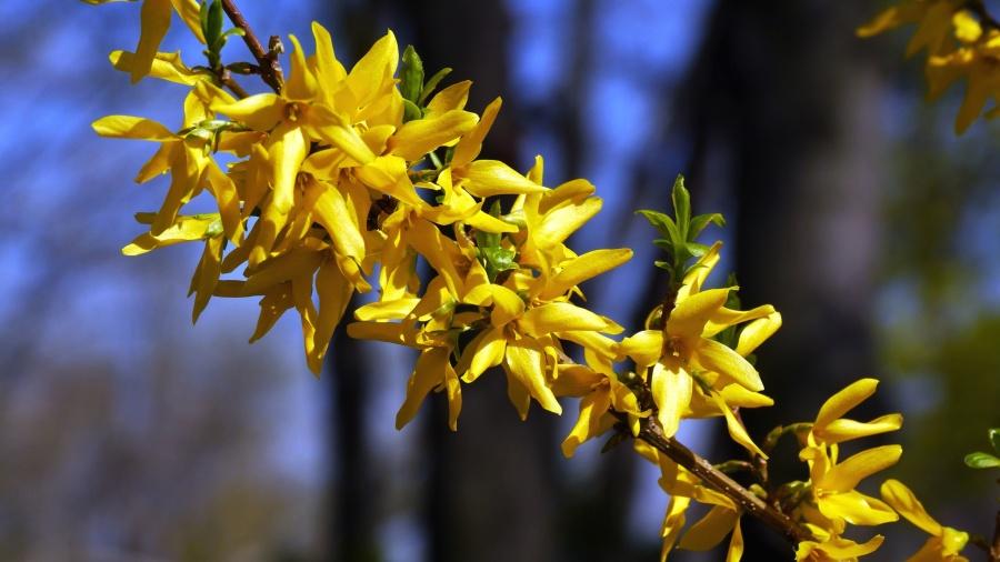Flora, bunga, alam, cabang, mekar, mekar
