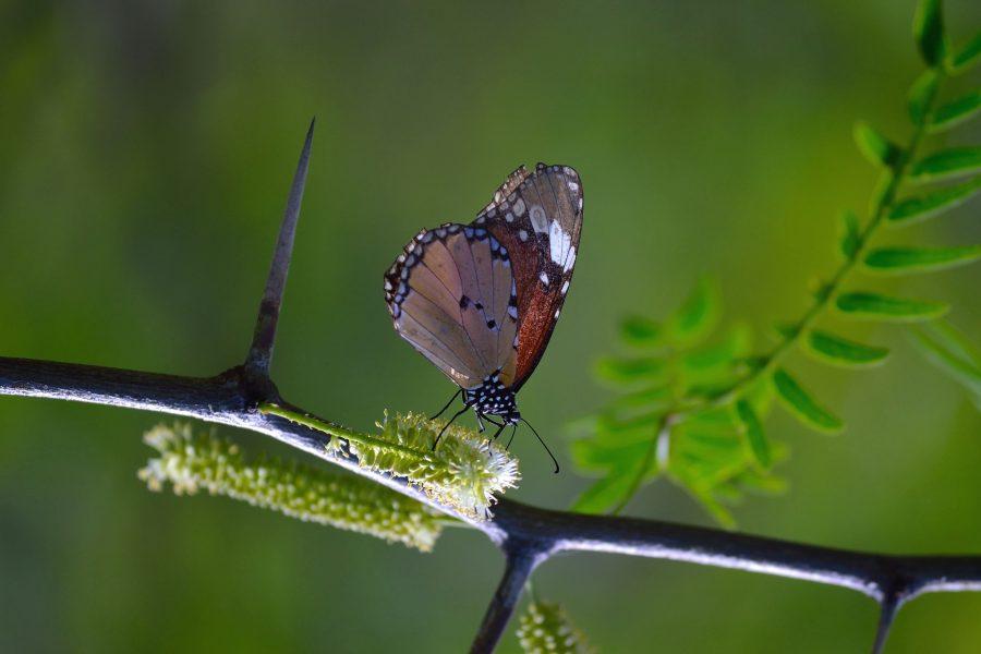 nature, plante, branche, papillon, insecte