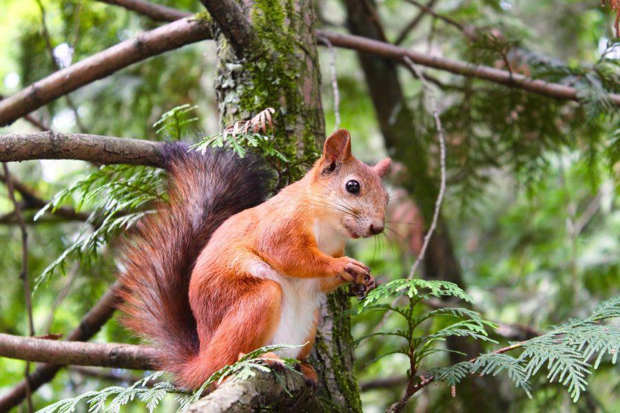 Image libre cureuil arbre animaux sauvages bois - Images d animaux sauvages gratuites ...