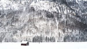 cabin, cold, frost, frozen, weather, winter, woods