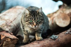 wood, kitten, animal, cat, pet, portrait, domestic cat