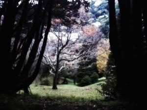 剪影, 旅行, 树, 森林, 秋天, 森林, 草, 风景, 叶子