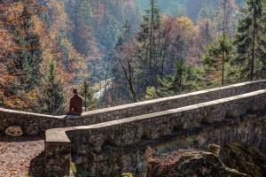 pohon-pohon pinus, road, berjemur, jembatan, tumbuhan runjung
