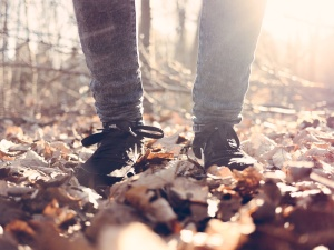 shoes, trees, weather, woods, leaves, legs, nature, pants