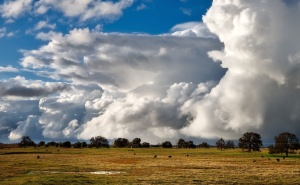 farm, field, grass, agriculture, beautiful, cattle, clouds