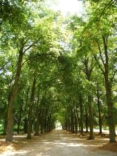 hout, bospad, bos, bladeren, park