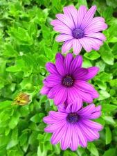 kwiat, kwiaty, płatki, liście, wiosna