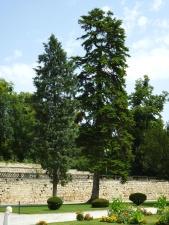 conifer boom, hemel, bloem, muur, gras, paden