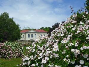 garden, flower, tree, sky, grass, windows