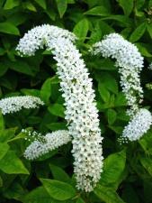 weißes Blatt, Frühling, Blüte, Blume, Blütenblätter