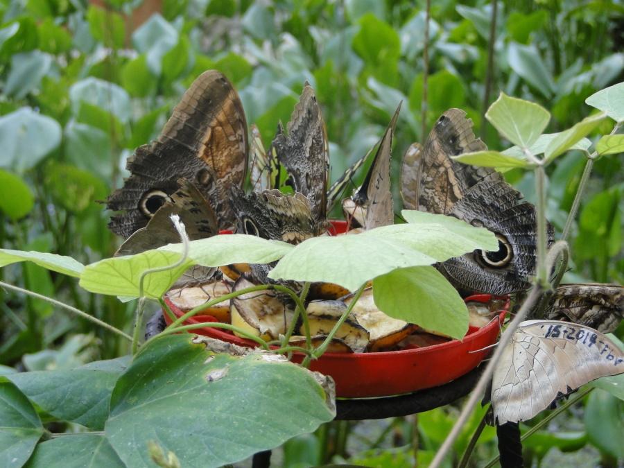 Hình ảnh Miễn Phí Bướm Cho ăn Màu Xanh Lá Cây Cỏ Côn Trùng