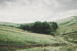 landscape, rural, trees, hill, farm, field