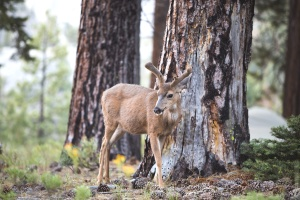tree, wildlife, animal, antler, deer, grass, nature,