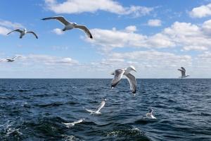 Gabbiano, uccello, gregge, acqua, nube, mosca, orizzonte