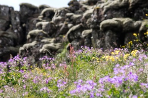 flowers, rocks, formation, summer, sunny, grass, landscape