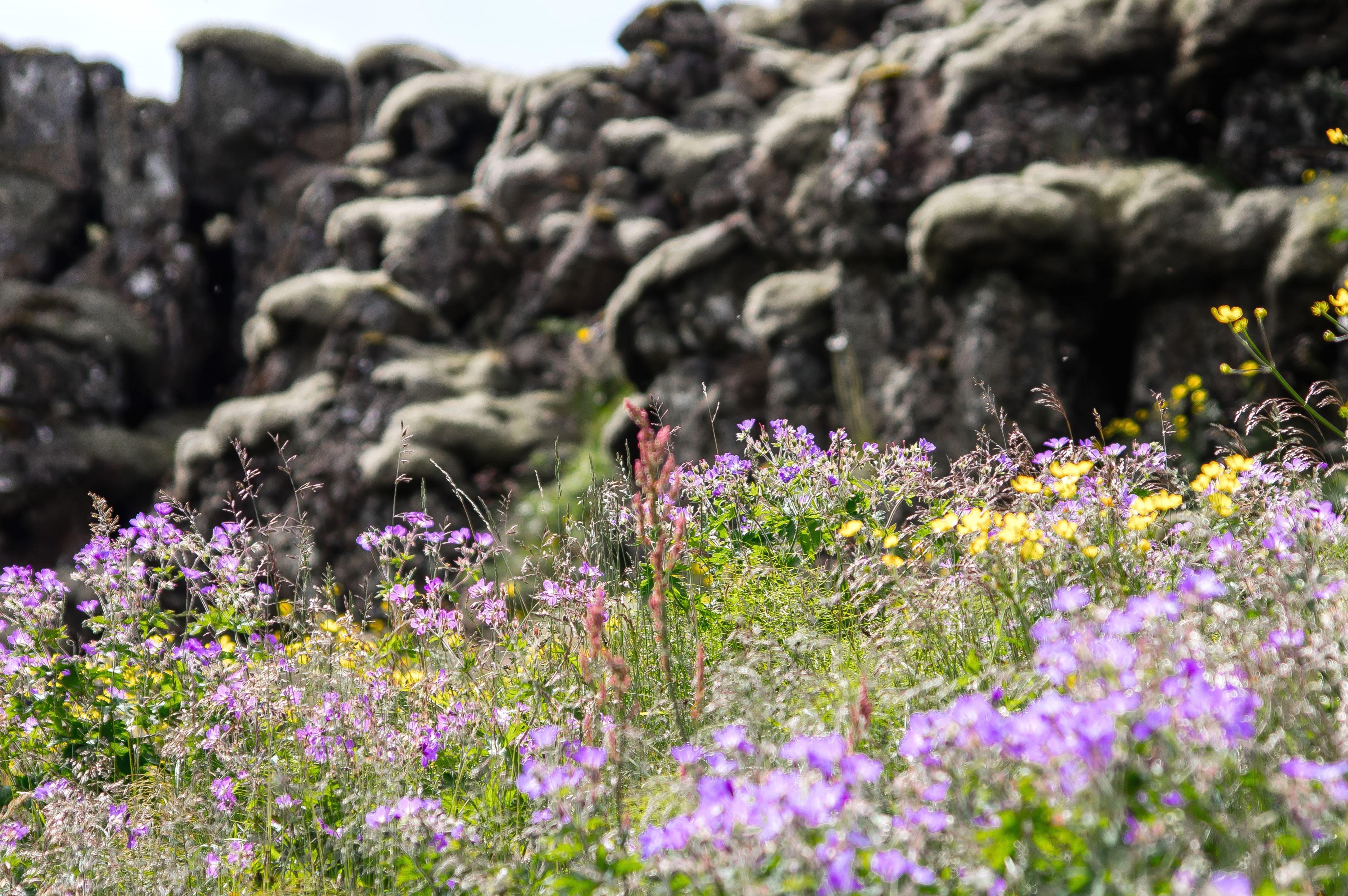 пойдёт полевые цветы с белой скалы фото моём канале найдёте