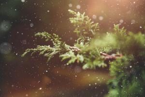 νιφάδες χιονιού, ερυθρελάτης, χειμώνα, φυτό, χιόνι