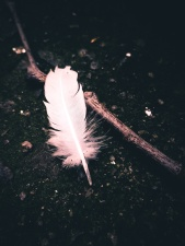 soil, stick, white, feather