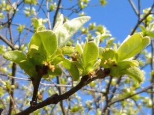 sky, branches, spring, garden