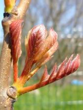 spring, garden, branches, leaves, Sun