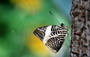 Motyl, owad, natura, skrzydło, drzewo