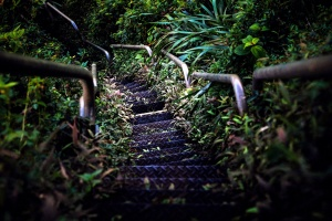 garden, grass, leaves, forest, stairs, jungle, tree, water, wood