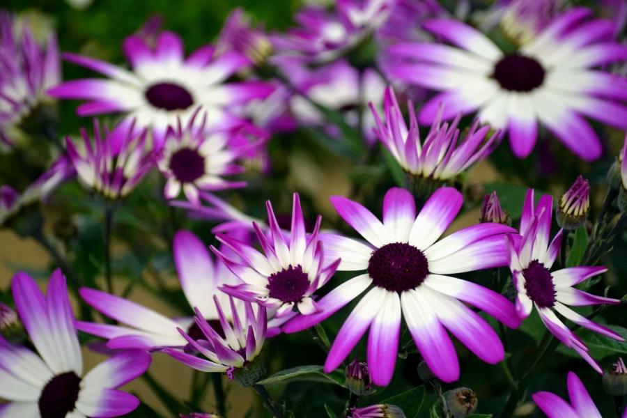 květ, jaro, jaro, květ, okvětní lístky, zahrada, květ