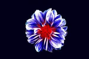 꽃, 어두운, photomontage