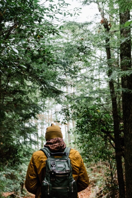 man, trees, wood, adventure, forest, nature