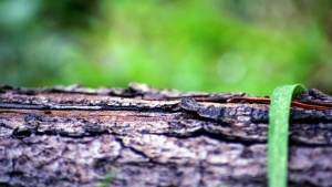 focus, surface, texture, tree, bark, environment, wood