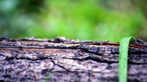 Foyer, surface, texture, arbre, écorce, environnement, bois