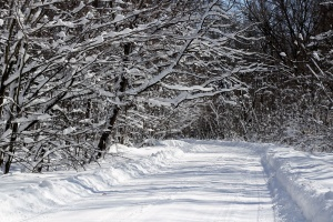 frozen, road, snow, tree, weather, winter, wood