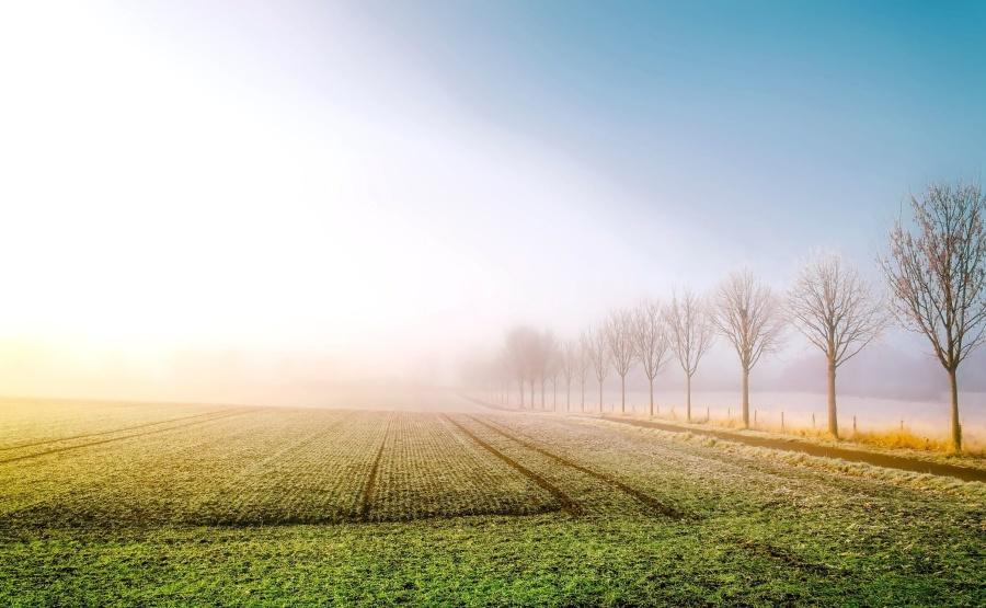Kostenlose Bild: Getreide, Bauernhof, Ackerland, Feld, Nebel, Gras ...