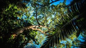 棕榈树, 森林, 夏天, 雨林, 树, 绿叶