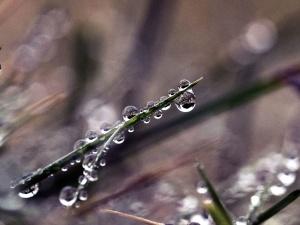 wody, kropli wody, mokro, świeżość, trawa, zielony, liść, ciecz