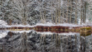 tree, water, winter, wood, frost, frozen, ice, landscape