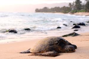 havet, stranden, havssköldpadda, vatten, djur, beach, kusten