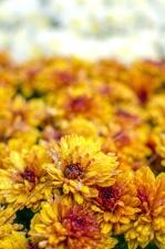 Pétales, jardin, été, beau, fleur, fleurs, fleurs