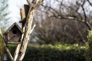 Jardín, árbol, birdhouse, rama