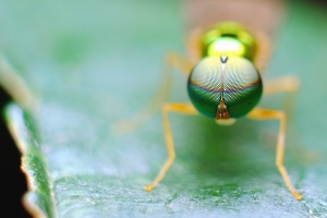 ant, close, eyes, insect, invertebrate, macro